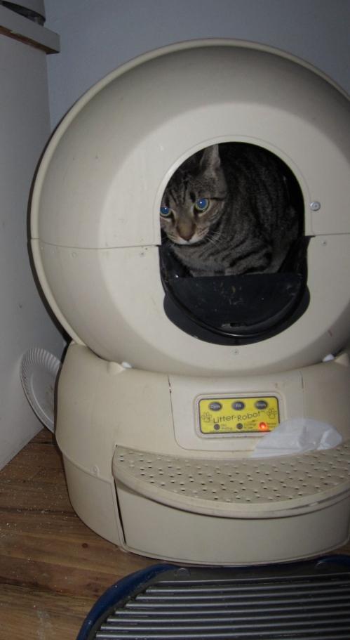 Cat using litter robot