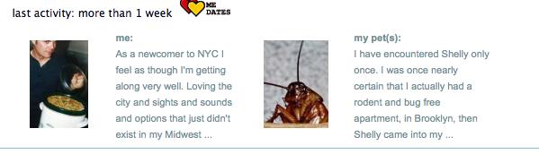 roach as a pet