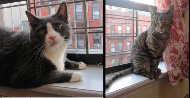 New york city cats on window ledge