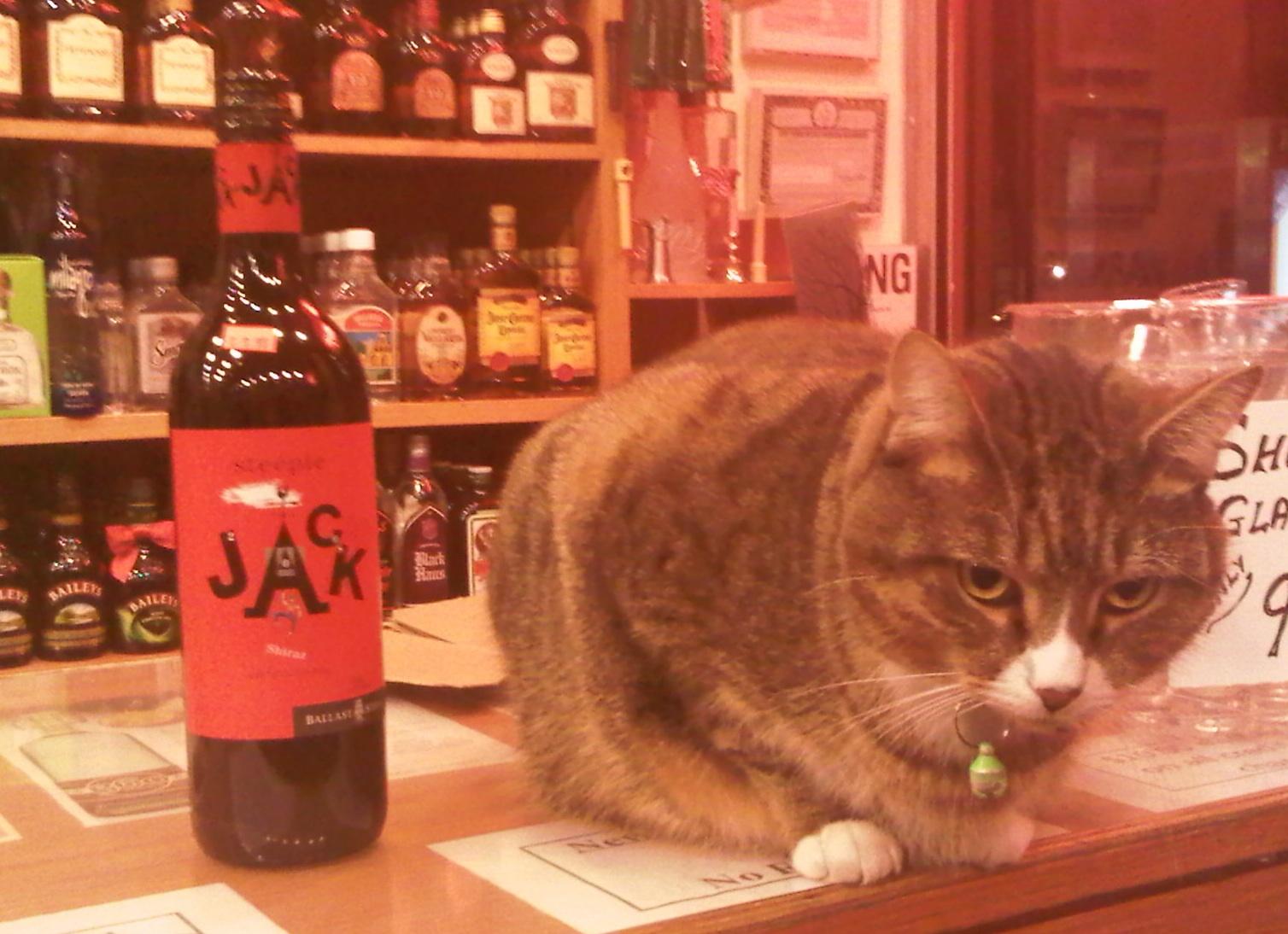 Jack the neighborhood wine store cat