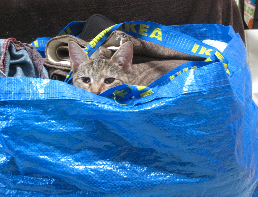 Cat hiding in Ikea bag filled with laundry