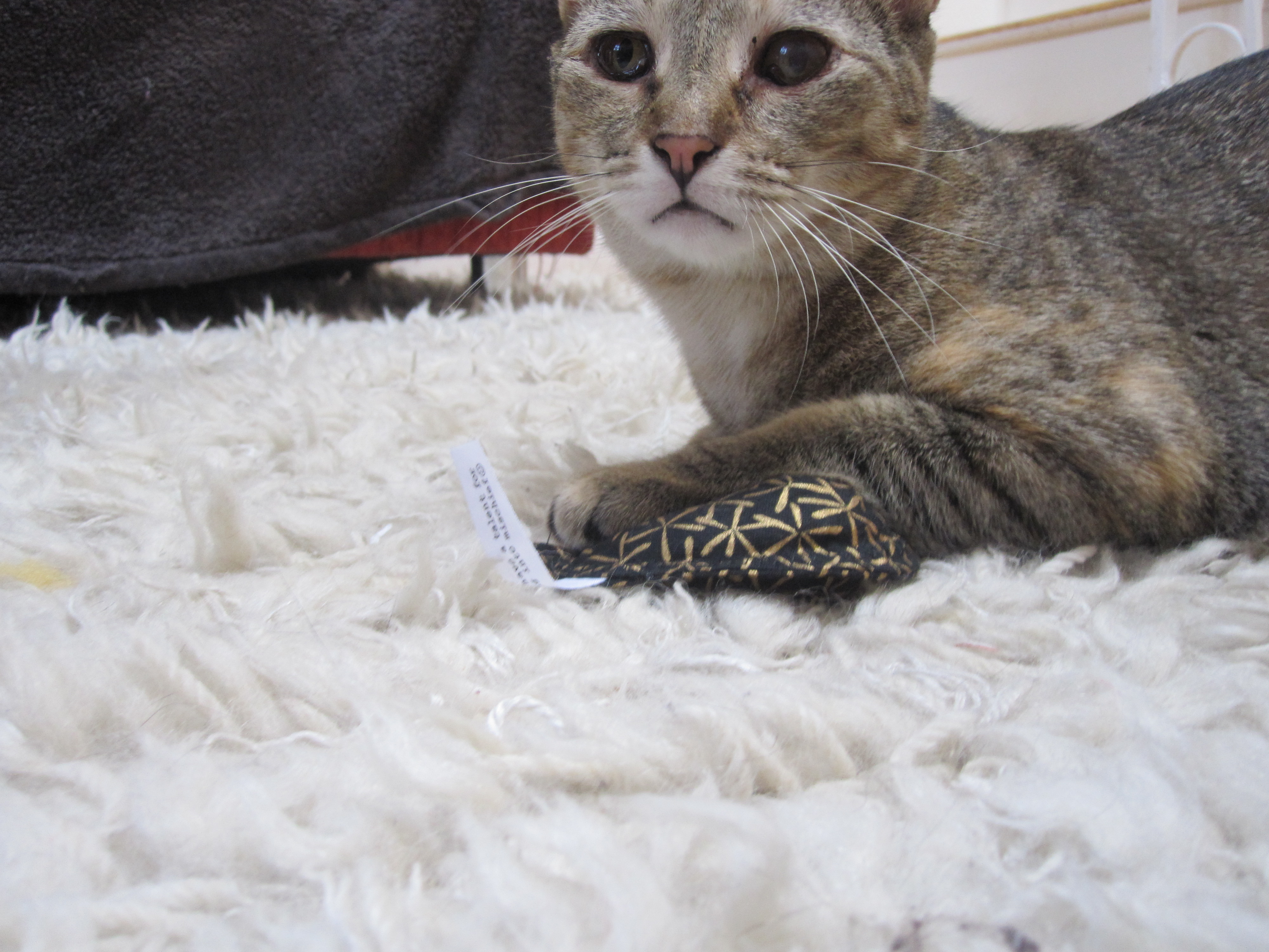 Modern cat toys and accessories
