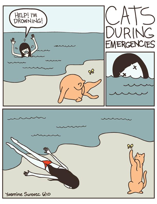 Cat versus Human illustrations