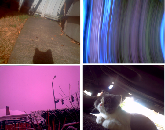Photographs taken by cats